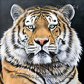 Sandi, REALISTIC ANIMALS, REALISTISCHE TIERE, ANIMALES REALISTICOS, paintings+++++tigerportrait5,USSN94,#a#, EVERYDAY ,tiger,tigers, ,puzzles
