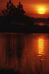 Sunrise silhouettes Sea Oaks and Pine Trees in Pensacola, Florida.   (Jim Bryant Photo).....