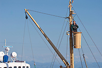 Walsafari, Wal-Safari, Ausfahrt mit einem Kutter, Boot, Schiff auf den Atlantik um Wale zu beobachten, whale watching, Wal, Andenes, Nord - Norwegen, ein Mann im Ausguck häfr Ausschau nach auftauchenden Walen