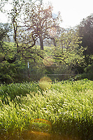 The pasture at The Alisal Guest Ranch and Resort, Solvang, California.