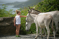 Friendly wild local donkeys that are always curious, cautious and looking for a handout.  <br />