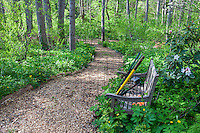 Overgrown bench with tools by mulched path in spring woodland garden, Boninti Garden, Virginia