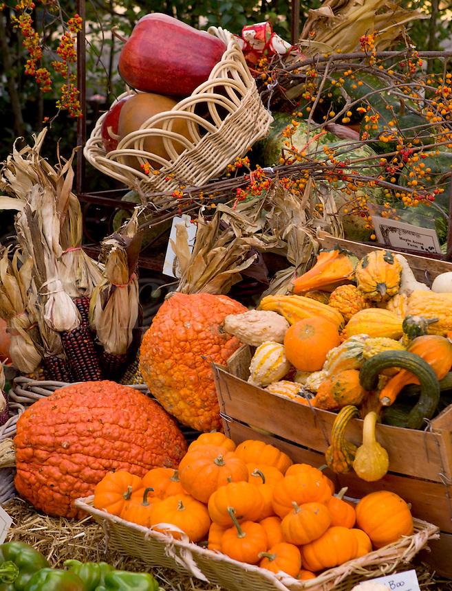 Arrangement of fall squash, corn and pumpkins