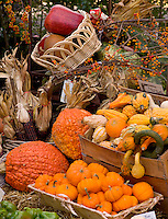Arrangement of fall squash, corn and pumpkins