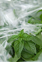 Fresh basil for sale at a farmer's market