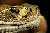 1R15-018z  Western Diamondback Rattlesnake - close-up of head showing heat sensing pits - Crotalus atrox