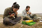 Snowy Plover (Charadrius nivosus) biologists, Karine Tokatlian and Ben Pearl, warming and banding chicks, Eden Landing Ecological Reserve, Union City, Bay Area, California