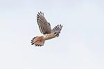 Hawks & Falcons