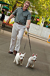 Man walking his two small dogs
