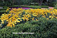 63821-20807 Gardens with Indian Summer Black-eyed Susans (Rudbeckia Hirta 'Indian Summer')  Prairie Sun Black-eyed Susans (Rudbeckia Hirta 'Prairie Sun') Marvel Yellow Marigolds  Cantigny, Wheaton, IL