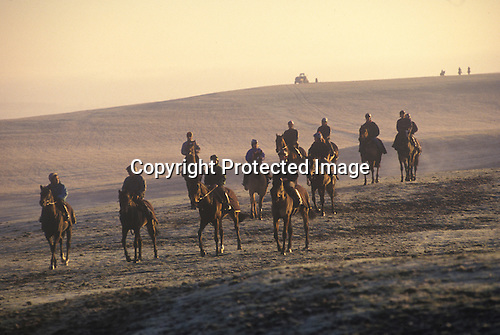 Morning gallops Lower Moor Middleham Yorkshire.