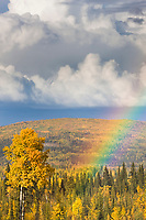 Rainbow over the autumn boreal forest in the Goldstream Valley area, Fairbanks, Alaska.
