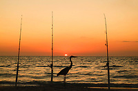 Great Blue Heron on beach, silhouetted between three fishing poles at sunset, Boca Grande, Florida