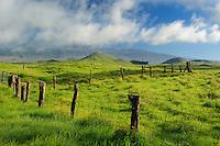 Mauna Kea from the Mana Road<br /> Parker Ranch<br /> Hamakua<br /> Island of Hawaii, Hawaii