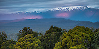Views across coastal native forest of Okarito Lagoon toward Mount Adams after sunset with last beams of light, Westland Tai Poutini National Park, West Coast, South Westland, UNESCO World Heritage Area, New Zealand, NZ