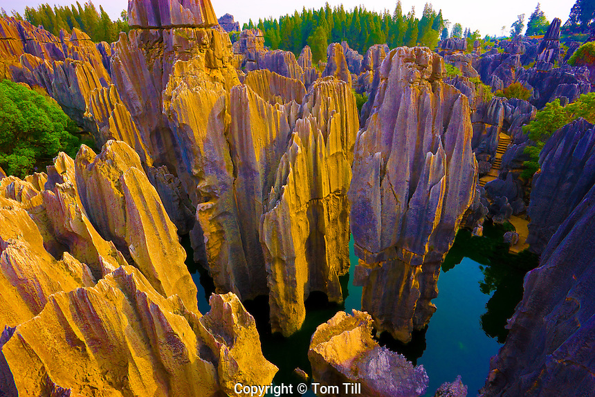 Spires at The Stone Forest  Stone Forest National Geopark.Peoples Republic of China.Yunnan Province.Limestone pinnacles.UNESCO World Heritage Site