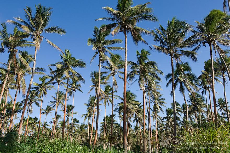 coconut-palm-tree-plantation-016358.jpg | Matthew Meier ...