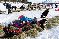 Sarah Stokey takes a nap in the sun with her team in the afternoon at the Rainy Pass checkpoint on Puntilla Lake in the Alaska Range during the 2019 Iditarod on Monday, March 4th 2019.<br /> <br /> Photo by Jeff Schultz/  (C) 2019  ALL RIGHTS RESERVED