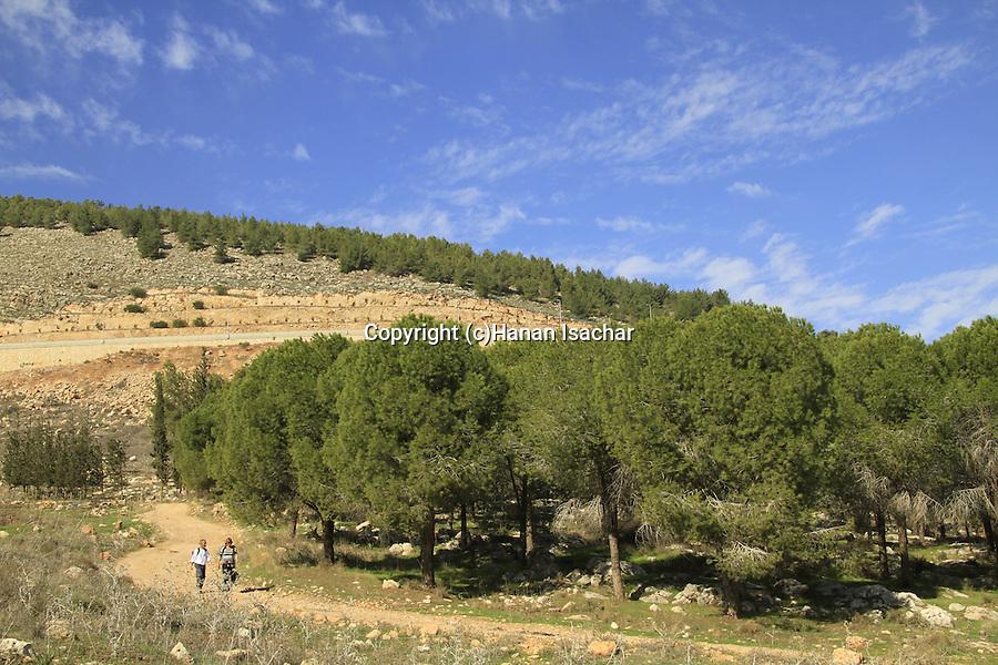 Israel, Lower Galilee, the Gospel Trail north of Iksal