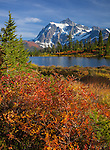 Mount Baker-Snoqualmie National Forest, WA: Mountain ash and grasses in fall color at Picture Lake with afternoon sun on Mount Shuksan