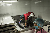 A worker stacks up the tuna fish in a fridge over layers of ice at the Meliomar Processing unit in Pasay city in Metro Manila in the Philippines. <br /> Photo: Sanjit Das/Panos for Greenpeace