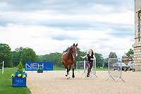 GBR-Carrie Byrom (DETECTIVE) CCI2* FIRST HORSE INSPECTION: 2014 GBR-Houghton International Horse Trail (Wednesday 21 May) CREDIT: Libby Law COPYRIGHT: LIBBY LAW PHOTOGRAPHY - NZL
