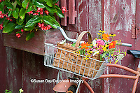 63821-22301 Old bicycle with flower basket next to old outhouse garden shed.   Red Wing Begonias in window box,   Marion Co., IL