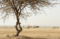 NIGER Zinder, Dorf Zongon Soumaguela, Wasser Transport mit Ochsenkarren von einem angelegten Wasser Reservoir, in der Duerrezeit die einizige Wasserquelle fuer Mensch und Vieh / NIGER Zinder, village Zongon Soumaguela, water transport with bullock cart from water pond , MORE PICTURES ON THIS SUBJECT AVAILABLE!!