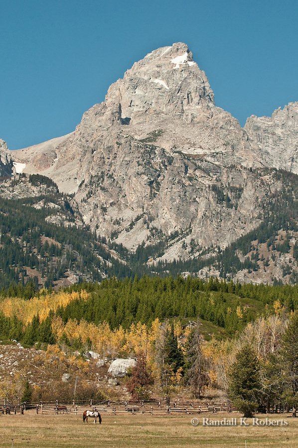 Horses graze under Grand Teton Peak, Grand Teton National Park, Wyoming
