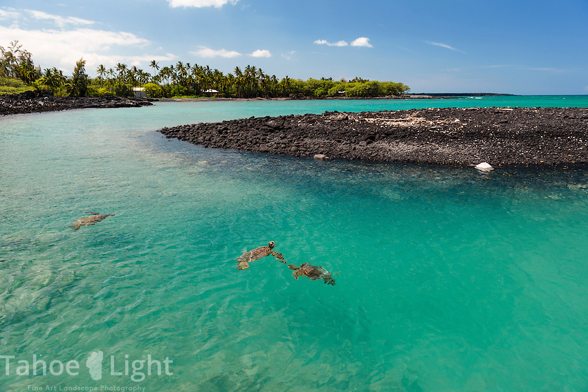 Kiholo Bay is a beautiful place that requires some walking to, so despite the fact that we say about 5-10 sea turtles per hour, we only saw two other people during our two days visiting this place located near Kona on the big island of Hawaii.