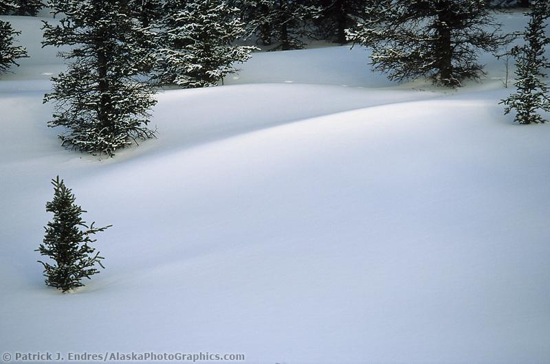 Snowy tundra and spruce trees, broad pass, Alaska