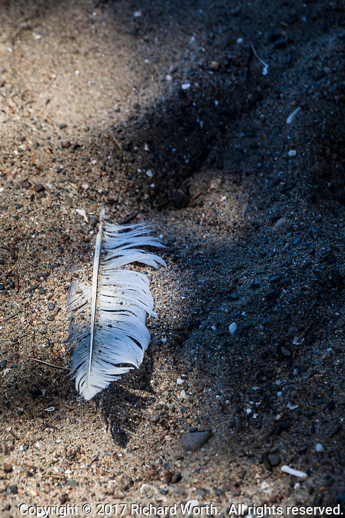 A lone feather on the sand, in the shadows, along Alameda's Crown Memorial State Beach.