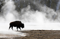 Yellowstone Winter 2016