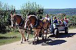 Horse and Wagon Ride through the Apple Orchard, New Hampshire