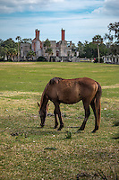Wild horses on Cumberland Island National Seashore . During their history on the island horses have been managed as both free-ranging and corralled livestock. By the mid-1900s horses were roaming the island with little or no care provided from island residents.<br /> <br /> Cumberland has the only herd of feral horses on the Atlantic coast that is not managed (no food, water, veterinary care, or population control). The herd is affected by all the natural stressors faced by native wildlife.