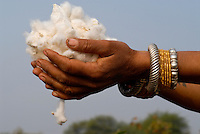 Indien Madhya Pradesh , bioRe Projekt fuer biodynamischen Anbau von Baumwolle in Kasrawad, Frau haelt Biobaumwolle in der Hand / INDIA Madhya Pradesh , organic cotton project bioRe in Kasrawad, handful of cotton