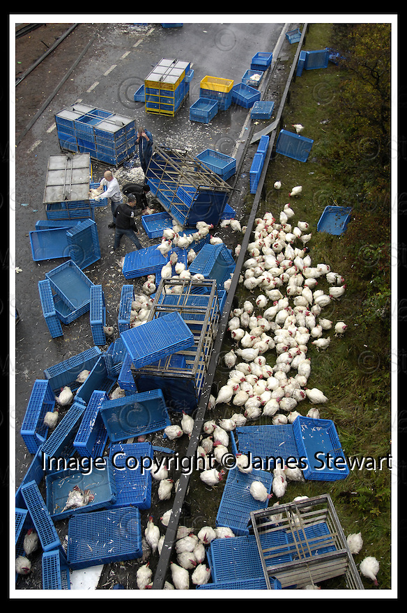 11/10/2007       Copyright Pic: James Stewart.File Name : sct_jspa01_chickens.THE A80 AT BANKNOCK WAS CLOSED FOR SEVERAL HOURS AS POLICE AND WORKERS TRY TO CATCH THE CHICKENS THAT ESCAPED FROM AN OVERTURNED LORRY.....James Stewart Photo Agency 19 Carronlea Drive, Falkirk. FK2 8DN      Vat Reg No. 607 6932 25.Office     : +44 (0)1324 570906     .Mobile   : +44 (0)7721 416997.Fax         : +44 (0)1324 570906.E-mail  :  jim@jspa.co.uk.If you require further information then contact Jim Stewart on any of the numbers above........