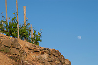 moon over the vineyard hermitage rhone france