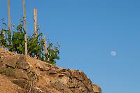 moon over the vineyard hermitage rhone france
