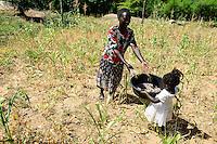 KENIA, ADS Anglican Development Services of Mount Kenya East, Stadt Embu, Dorf Gichunguri, Projekt Regenwasserauffang an einem Felsen und Speicherung in Tanks zur Nutzung in Duerreperioden, Agnes Irima, 44 Jahre, auf ihrem vertrocknetem Maisfeld, dazwischen Bohnen, die sie heute erntet, mit Enkelin Peace Celille, 2 1/2 Jahre
