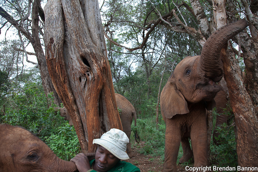 Guyo Golicha plays with with Naipoki, one of the 18 orphaned baby elephants at the David Sheldrick Wildlife Trust in Nairobi National Park.