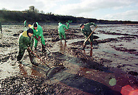 Pictured: Workers trying to de-pollute one of the beaches in Pembrokeshire after the Sea Empress run aground<br />