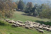 - holiday farm Cascina Raflazz in Paroldo (Cuneo),  ...sheeps grazing....- agriturismo Cascina Raflazz a Paroldo (Cuneo), pecore al pascolo