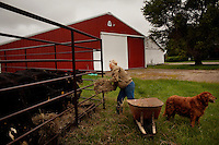 Wellsville, Kansas, May 28, 2011 - Fourth generation family farmer Robin Dunn feeds hay to her Angus cattle at her farm, Dunn's Landing. The cattle are normally pastured at another property but they escaped this week during the storms and she was forced to house them in a pen on her main farm. ..She bought her great grandparents homestead from her father in 1993, and today grows soybeans, corn, sorghum and hay, and maintains a small herd of Black Angus cattle and eight horses which she uses to for wagon and stage coach rides.  According to the most recent Department of Agriculture data, there are more than 306,000 farms run primarily by women in 2007, representing about 14 percent out of the 3.3 million American farms.  That's up from 237,819 or 11 percent in 2002, and a big increase from the 1980s when about five percent of U.S. farms were operated by women.Dunn has branched out from her farming business, using her century-old dairy barn to host 25 to 30 weddings and other events a year. She also attracts tourists for farm tours and carriage rides, and holds sessions with school children to teach them about faming.