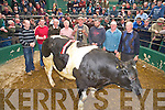 Pictured wit the champion male at the Fat Stock Show and Sale in Mid Kerry Co Op Mart on Saturday were Michael Randles, judge, Kenneth Grant,judge, Denis Counihan, Denis Sheehan, manager, James Nolan, Listry, seller, Timmy Moriarty, Firies, buter, Bernie Nolan and James Daly, Chairman Mid Kerry Co-Op Mart.....NO FEE.....PR SHOT...... ..........................