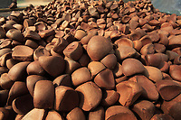 Raoni Nascimento da Silva, 32 anos, coordenador de Suprimentos de Biodiversidade II, da Natura A andiroba (Carapa guianensis, também chamada de Karaba ou Crabwood) é uma árvore alta, frondosa, bonita, de folhas alongadas, com pequeninas flores brancas. É característica da região amazônica e dos solos úmidos de toda a região em especial no Amapá, Acre e Pará.