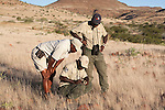 Save the Rhino Trust trackers Erwin Karatjiva (crouching) and Dansiekie Ganaseb(right), with Wilderness Safaris guide Gotlod Hawaxab (left), recording black rhino sighting, Palmwag concession, Kunene region, Namibia