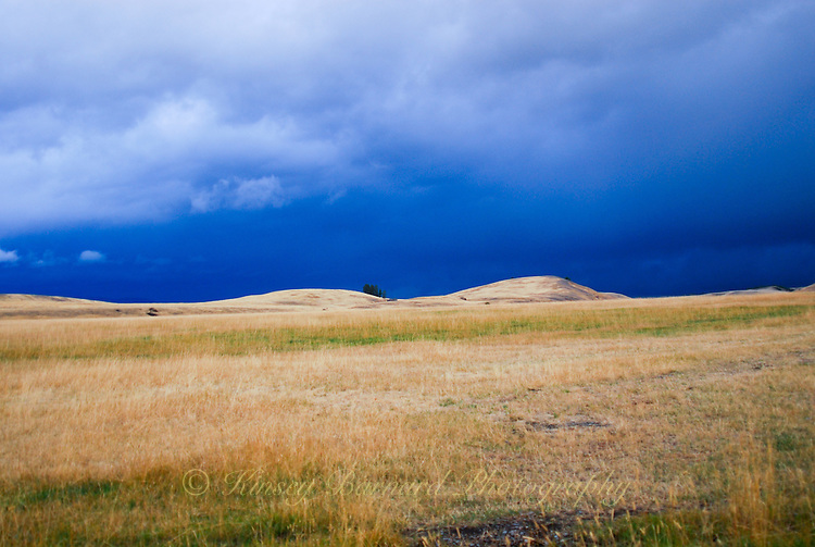 Grassy plains of the Tobacco Valley in Montana. Dark storm clouds providing the back ground.