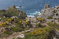 France, Bretagne, (29), Finistère, Cap Sizun,  Cléden-Cap-Sizun : La Pointe du Van, côte Nord Ouest //  France, Brittany, Car Sizun,  Cléden-Cap-Sizun: The Pointe du Van