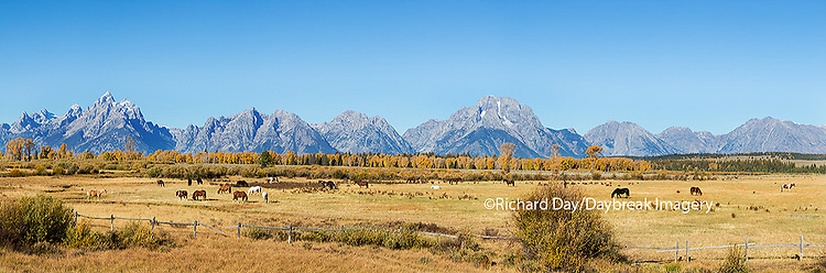 67545-09011 Horses and Grand Teton Mountain Range in fall,  Grand Teton National Park, WY